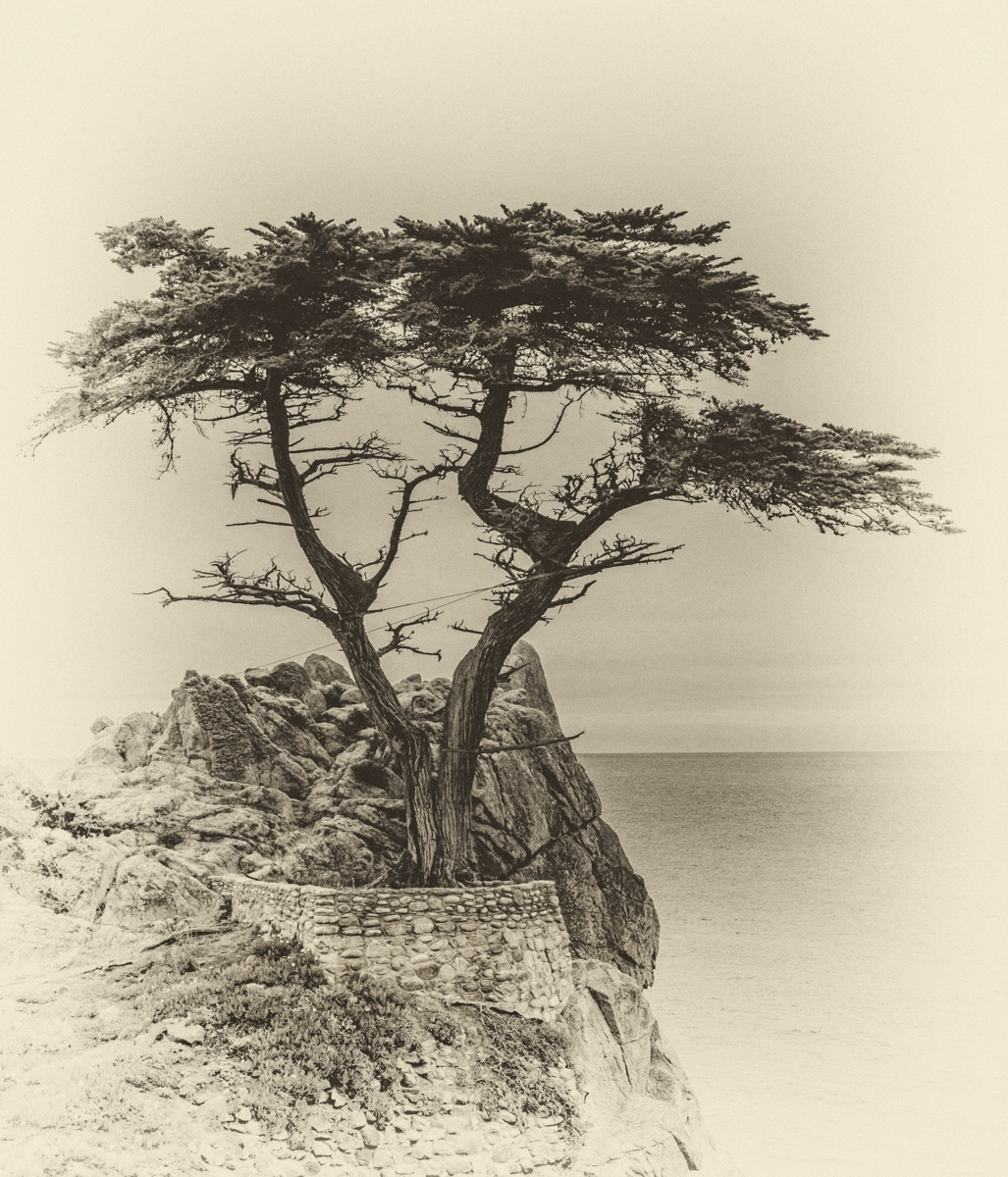 'The Lone Cypress' (PI 1 Place) by Michael Funk - SR