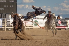 'Bucking Bronco throws rider off' (JA 1 Place) by Dawn Jefferson - ML
