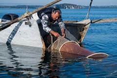 'Fishing on Lake Bolsena Gianni pulls in his net. Lake Bolsena, Italy' (JI 1 Place) by Carol Thomas - BK