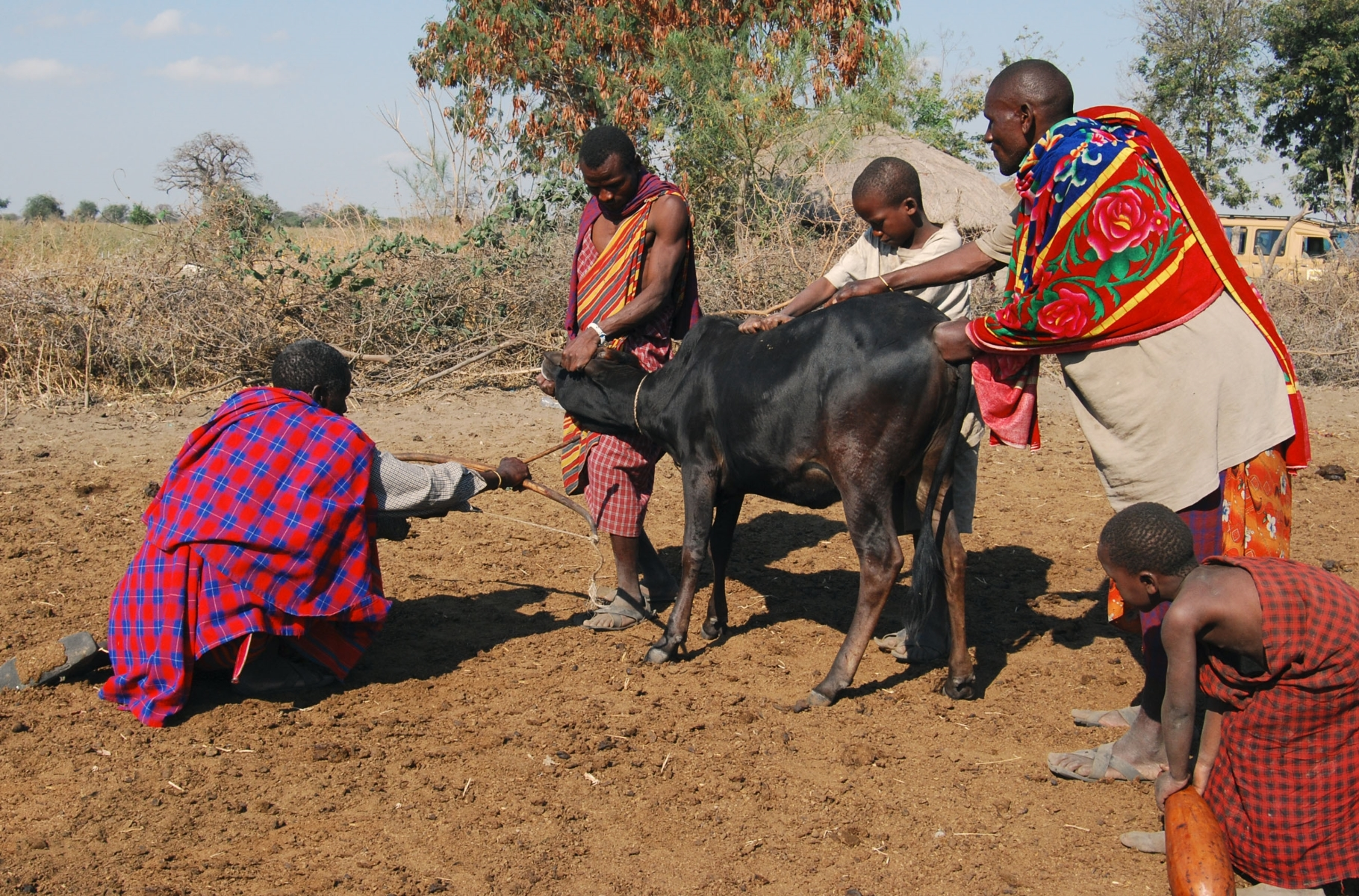Cow-blood-is-considered-a-healing-medicine-for-the-Maasaiit-JA-1-Place-by-Bill-Sumits-MR