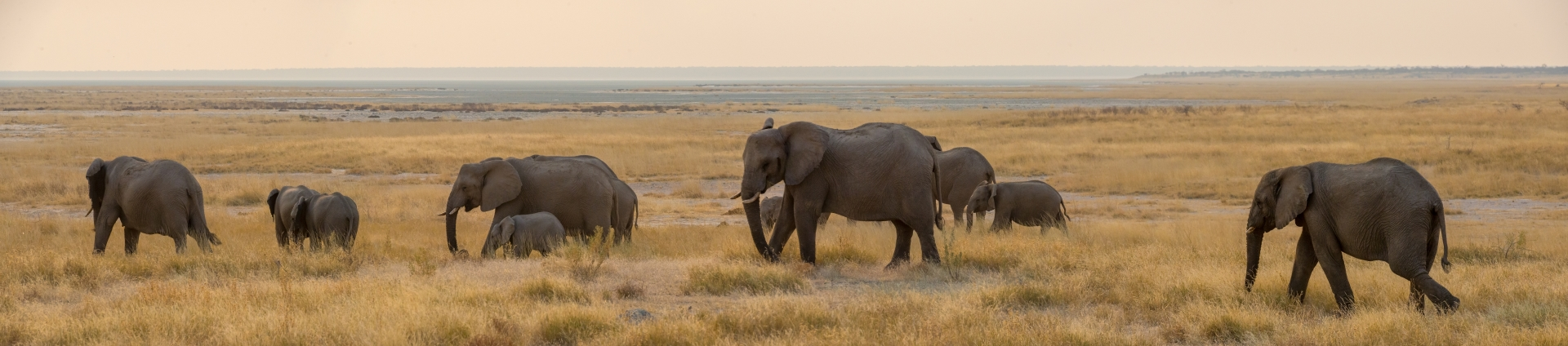 'In arid Etosha National Park distance to water is critical to elephants well-being' (TB 1 Place) by Cindee Beechwood - MR