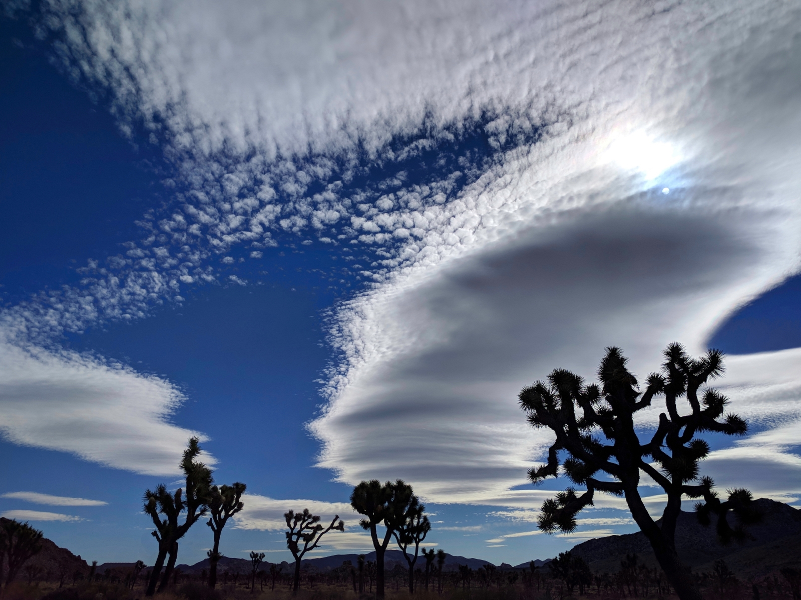 'Surreal skies- Joshua Tree National Park' (PB 1 Place) by Alice-Ann Whiteneck - RO
