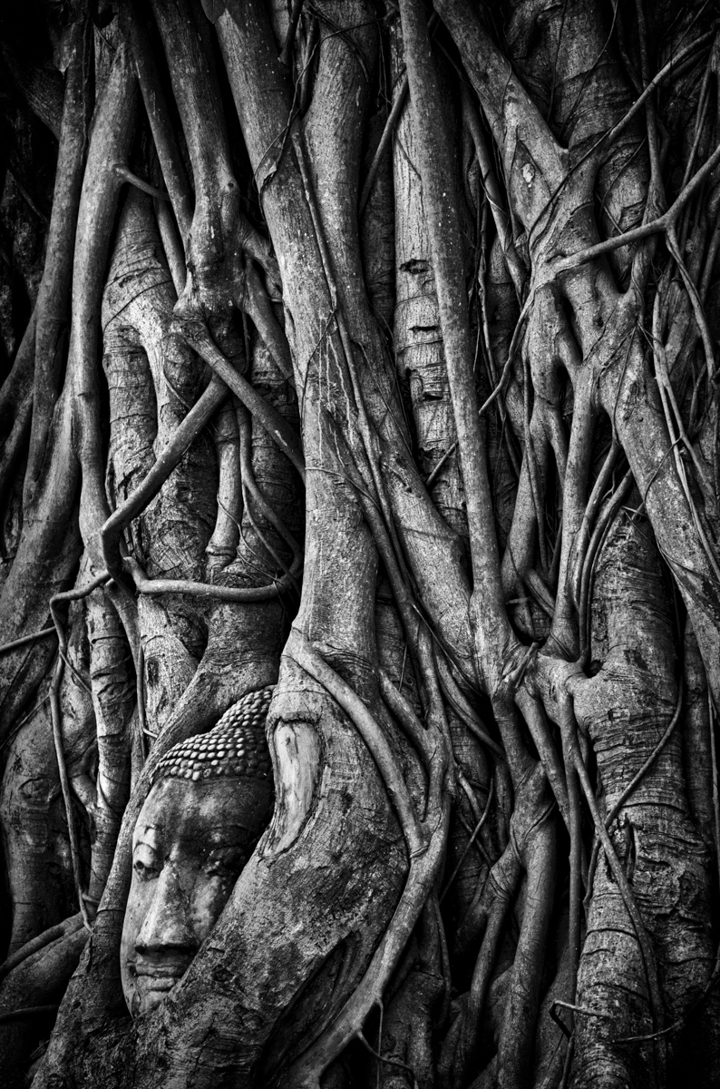 '''The root of suffering is attachment.'' - Buddha _Wat Mahathat, Ayutthaya, Thailand' (MM 1 Place) by Nancy Goodenough - SR