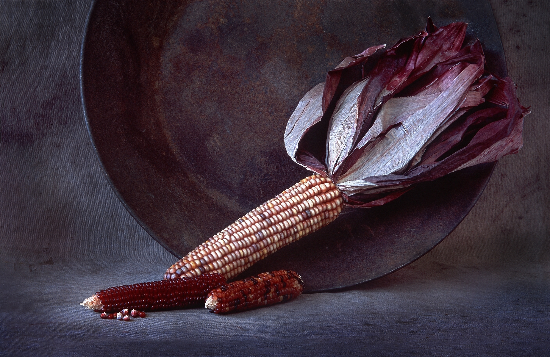 Old-Indian-Corn-and-Old-Rusted-Plate-PM-Best-in-Show-by-Claudia-Peterson-LS