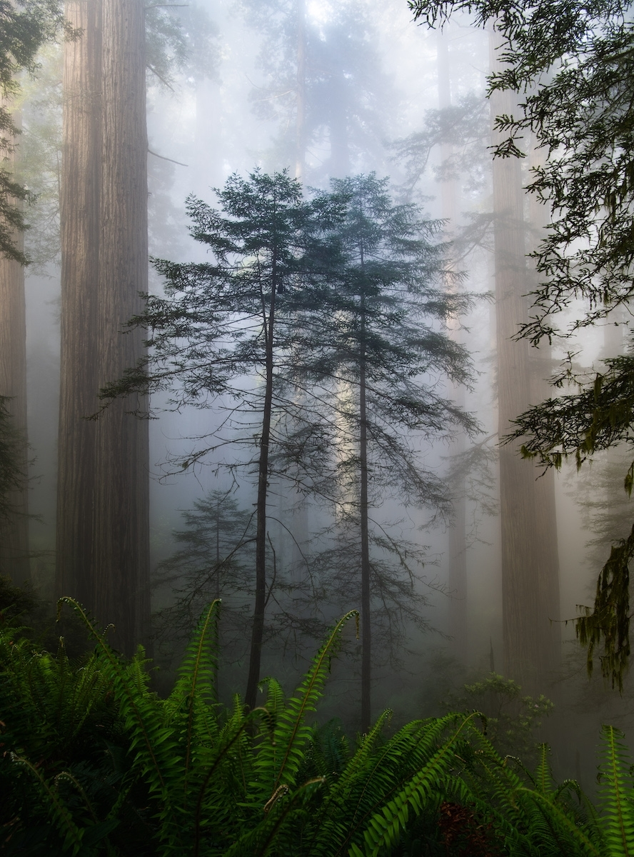 The-Twins-Del-Norte-Redwood-State-Park-PA-1-Place-by-Lisa-Rohrbach-CC