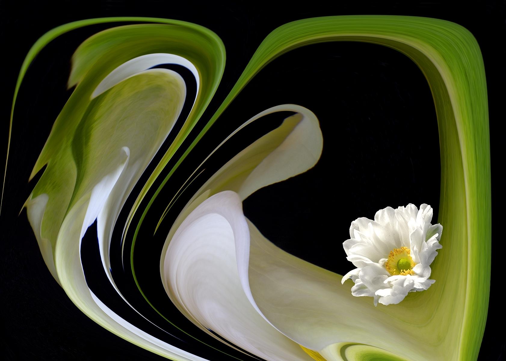'Calla and Anemone' (CB 1 Place) by Kazuko Hamano - SC