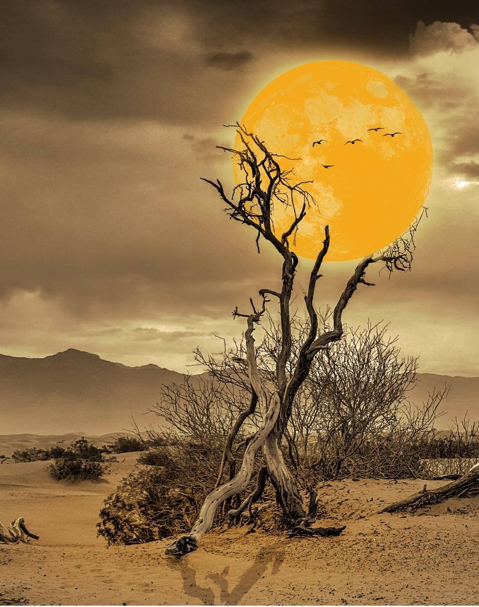 Caught-in-a-desert-tree-CA-Best-in-Show-by-Marina-Grabovskaya-FR