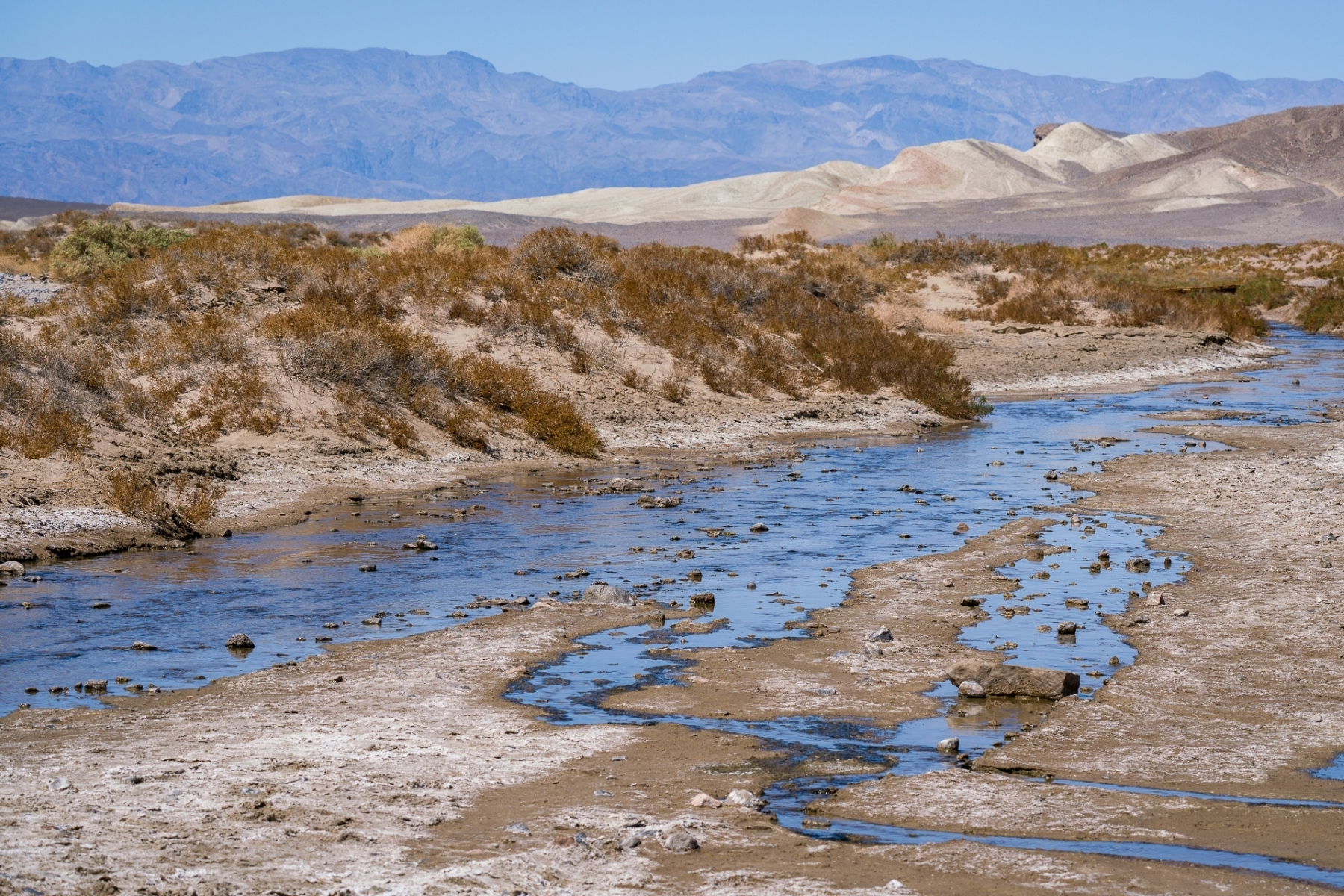 Salt-Creek-Pupfish-1-This-remnant-of-an-ancient-freshwater-lake-once-covering-much-of-Death-Valley-converted-to-salt.-NA-Best-in-Division-by-Herbert-Gaidus-SR