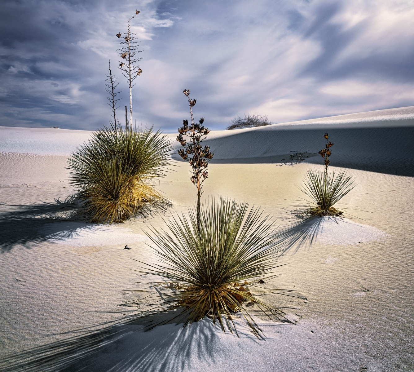 Three-Yuccas-Snow-on-the-Dunes-White-Sands-New-Mexico-PA-BEst-in-Division-by-Matt-Ross-BK