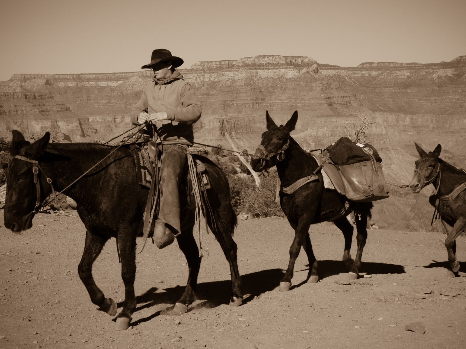 Wranglers-ensure-that-mail-and-supplies-get-safely-to-Phantom-Ranch-Grand-Canyon-JB-1-Place-by-Zina-Mirsky-RO