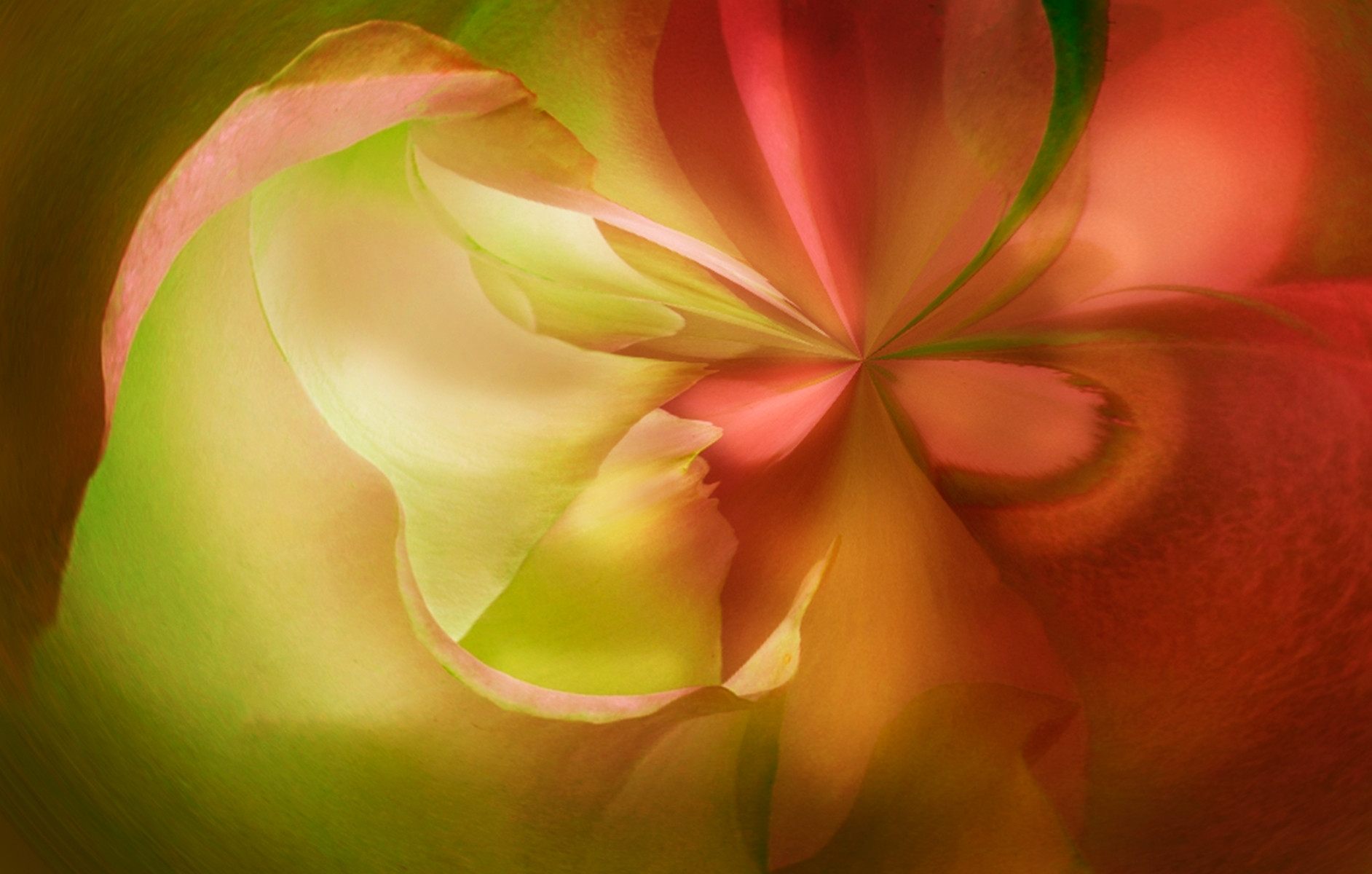 Flower-Mood-CM-1-Place-by-Claudia-Peterson-SC