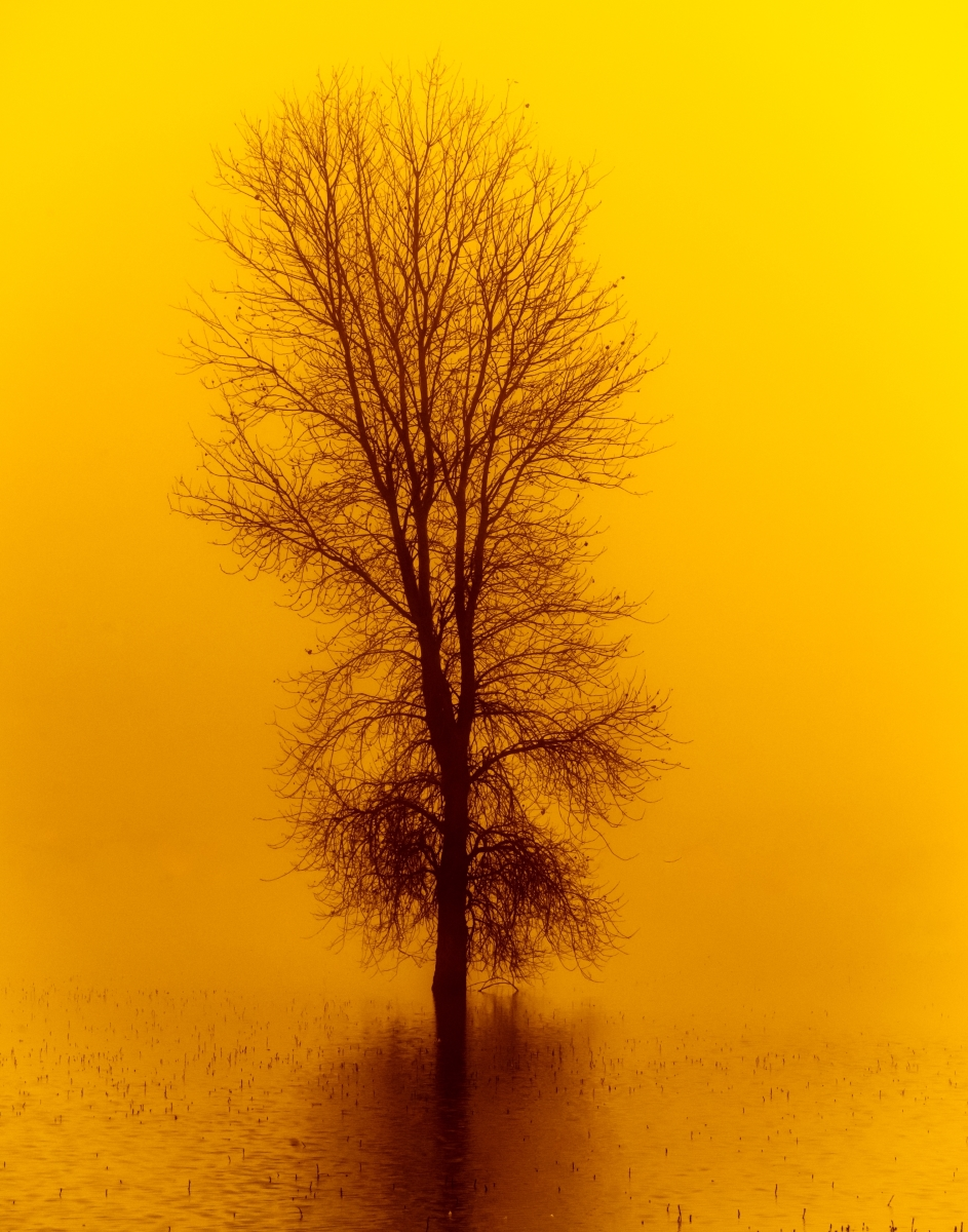 Winter-Tree-PI-1-Place-by-Cindee-Beechwood-MR