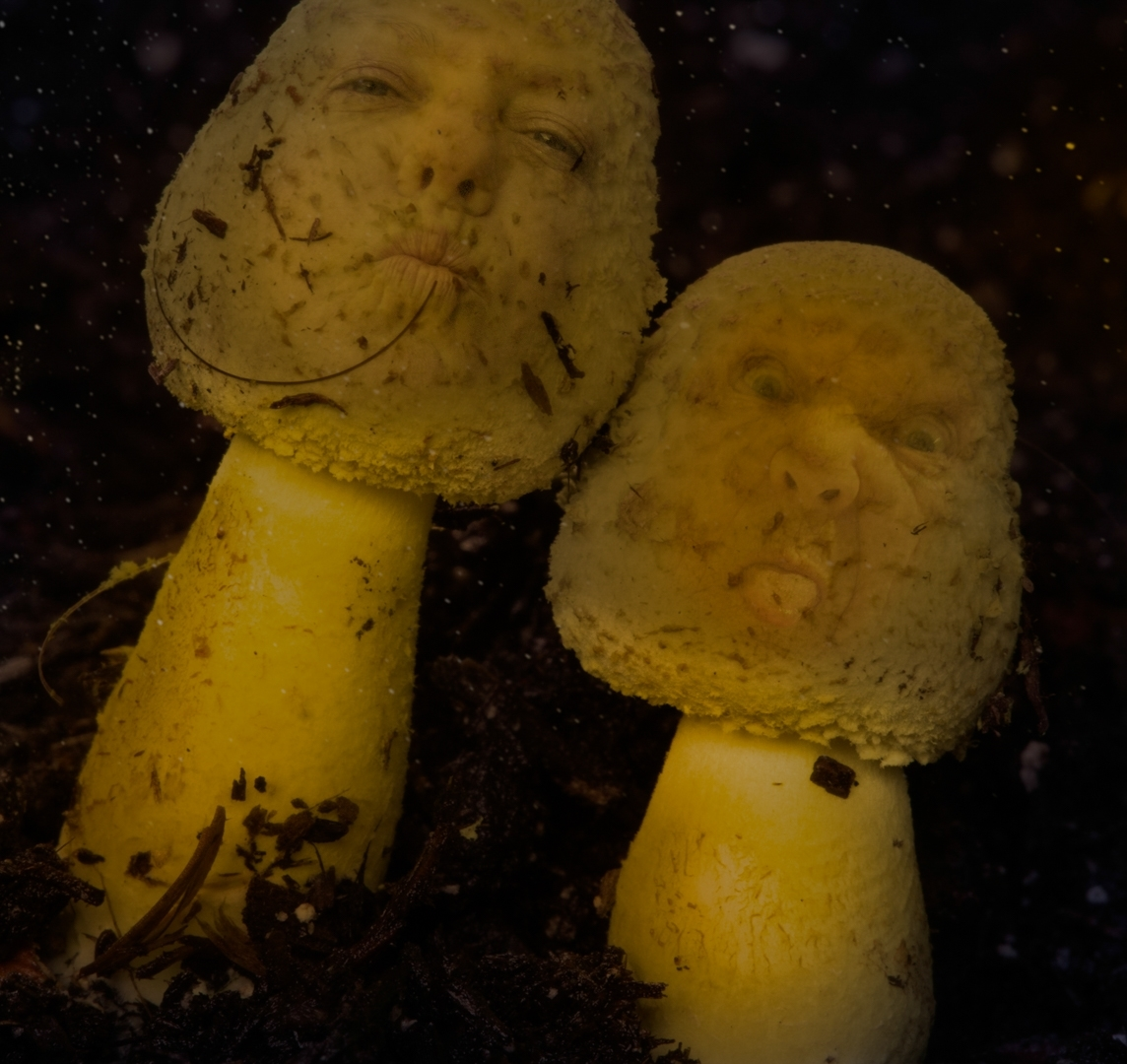 Shrooms-with-Attitude-CI-1-Place-by-Tracy-Lussier-CC