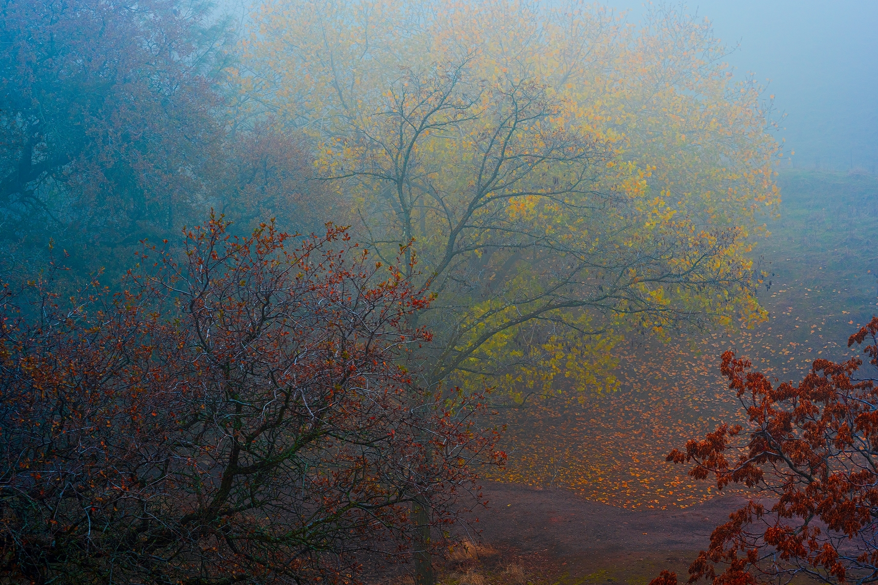Autumn-Mist-3389677-PB-1-Place-by-Richard-Haile-CC