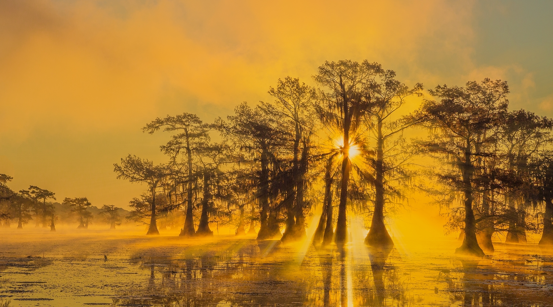 Foggy-sunrise-at-the-swamp-PM-Best-In-Show-by-Shinnan-Kiang-LV