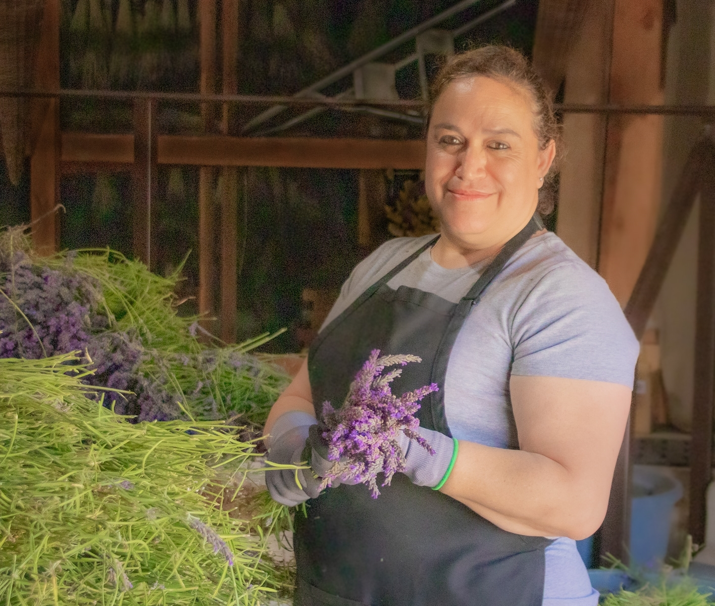 Lavender-3-An-employee-looking-through-a-barn-window-gathers-the-lavender-into-small-bundles-preparing-it-for-hanging-it-to-dry.-JI-Place-by-Betsy-Waters-SR