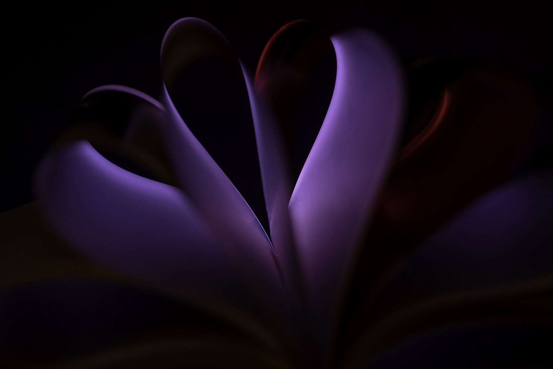 Silken-Bloom-CA-1-Place-by-Trisha-Brown-SR