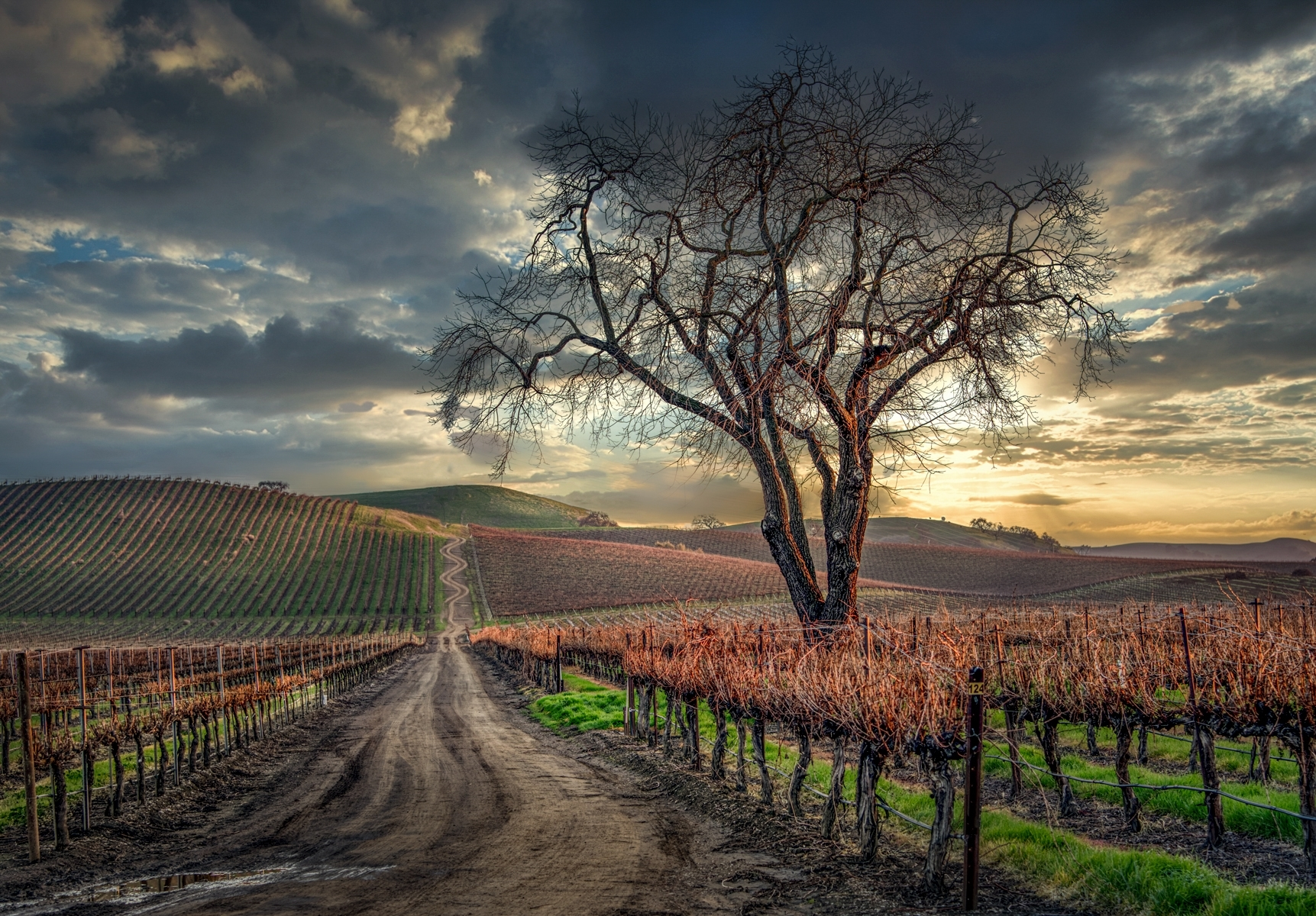 Sunset-in-the-Marina-Ave-Vineyard-Livermore-CA-PA-1-Place-by-Barry-Zupan-LV
