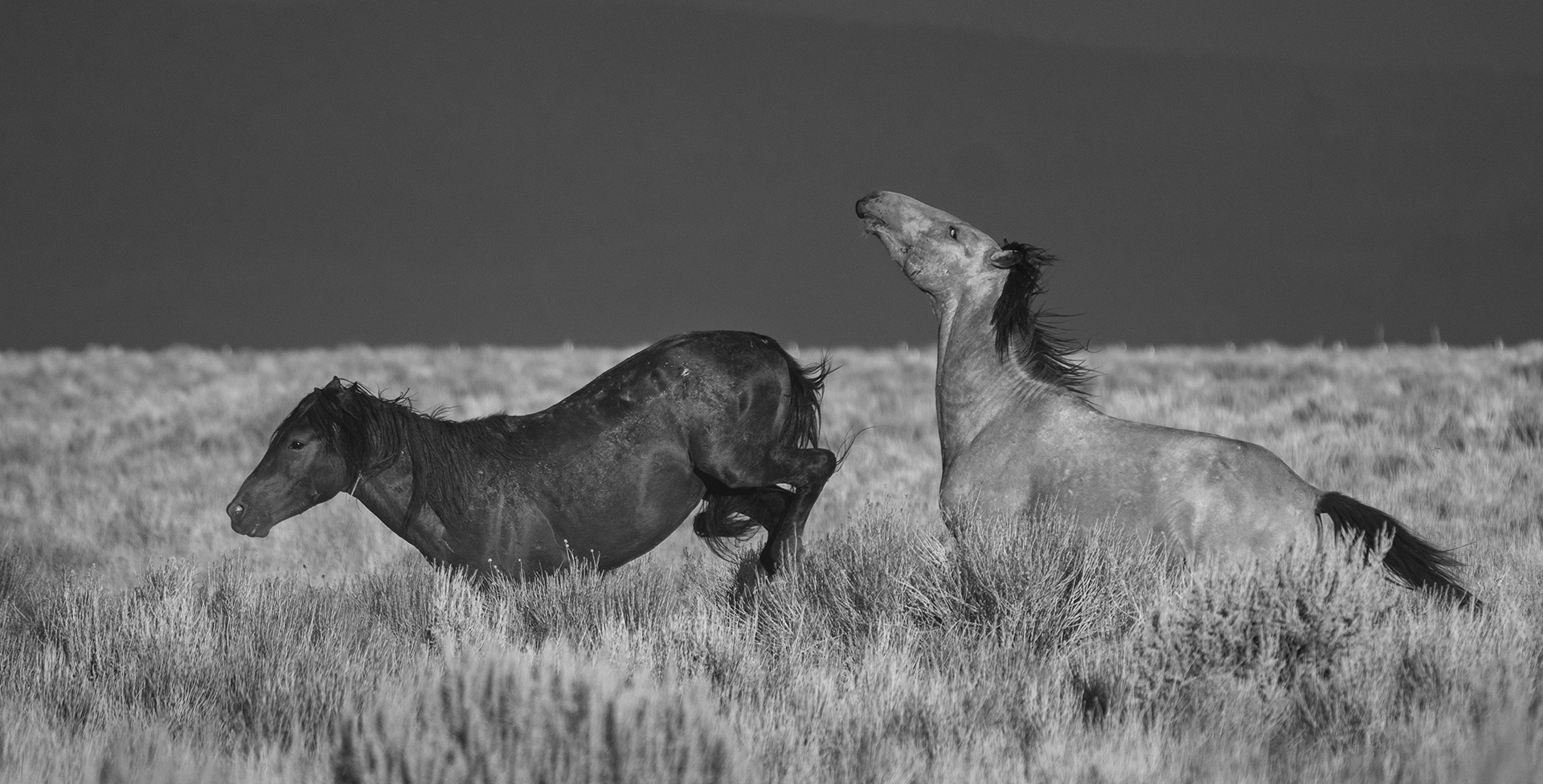 Horses-Kicking-Up-Their-Heels-In-The-Desert-MI-1-Place-by-Douglas-Smith-CC