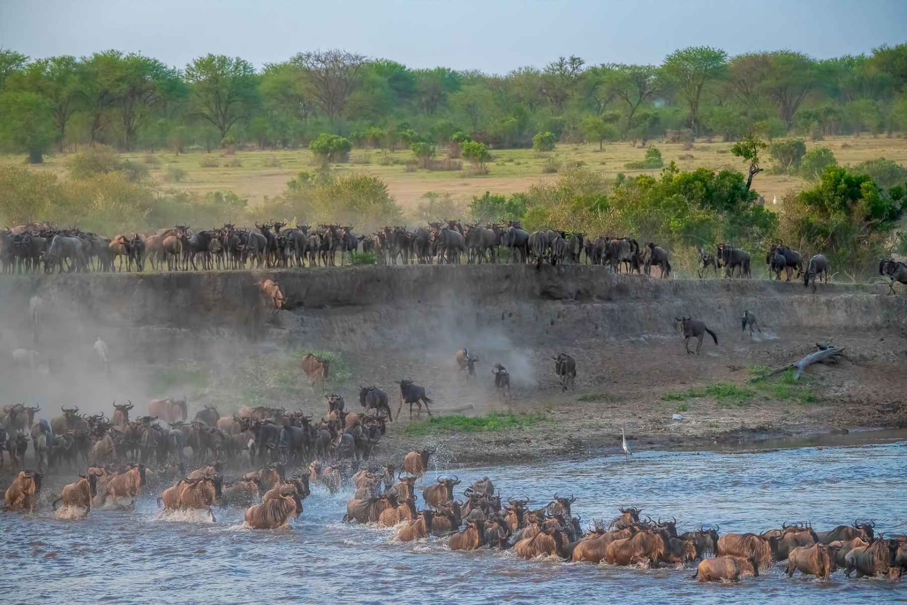 Wildebeest-gather-on-one-bank-of-the-Mara-River-until-a-few-start-the-rush-en-mass-NA-0-Place-by-Lynn-Oakleaf-DV