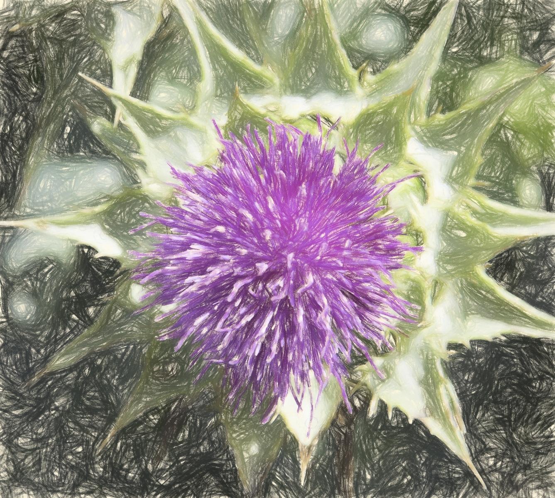 COLORED-PENCIL-FLOWER-CB-1-Place-by-Michael-Henn-PE