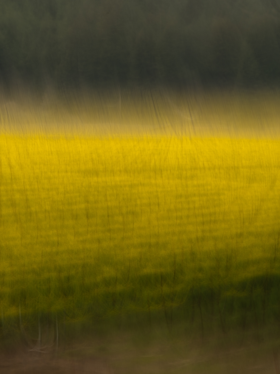 Along-a-Golden-Road-CI-1-Place-by-Dennis-Herman-MR